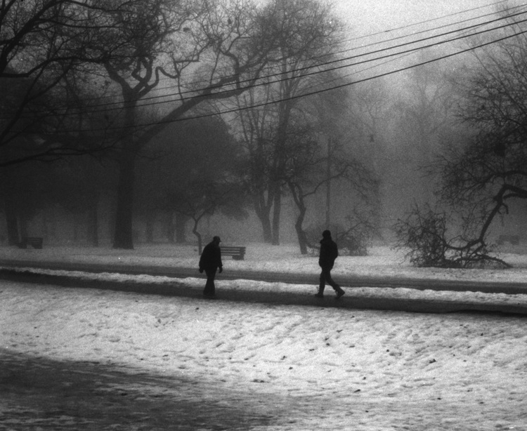High Park in Heavy Fog - Dante Guthrie